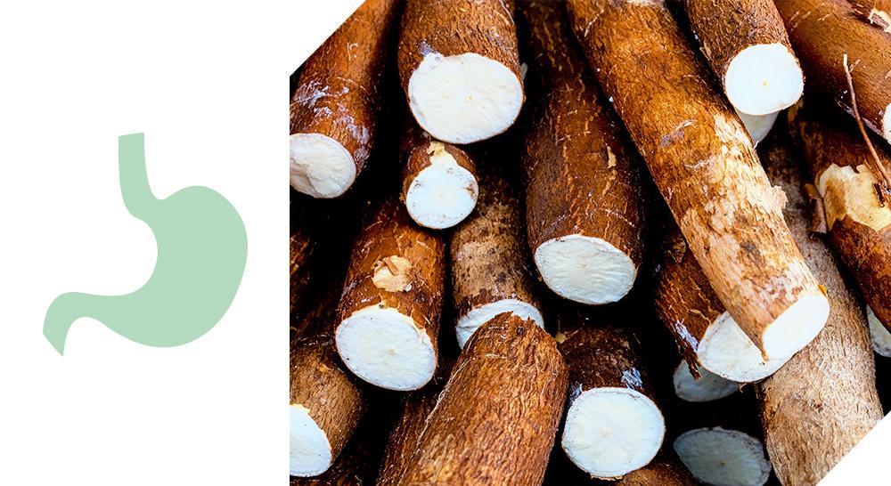 croquettes adult sterilized quality sens digestion facile