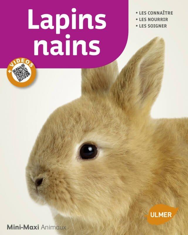 Lapins nains Mini Maxi vidéos