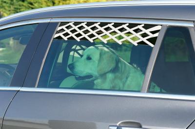 Grille sécurité auto pour vitres latérales