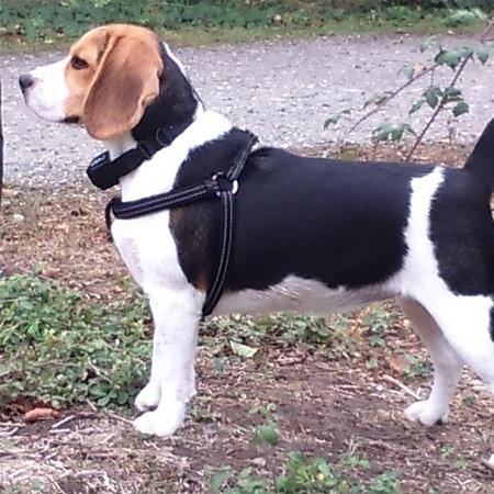 avis client aurélia collier dog training 200 zolia