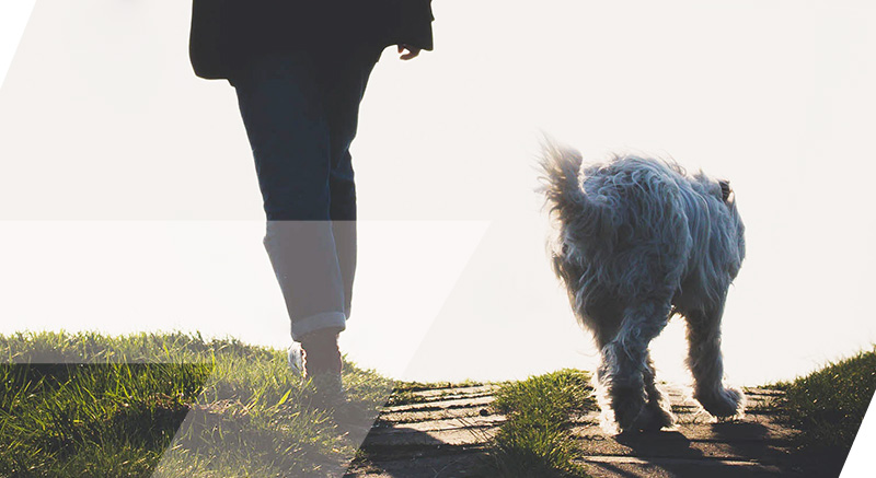zolia collier dog training 200 efficace et indolore