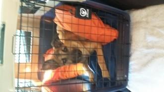 Cage-de-transport-pour-chien-ZOLIA-TRAVELER-IATA-de-80cm-a-100cm_de_CORINNE_52614044057af37c4dd01a5.86862587