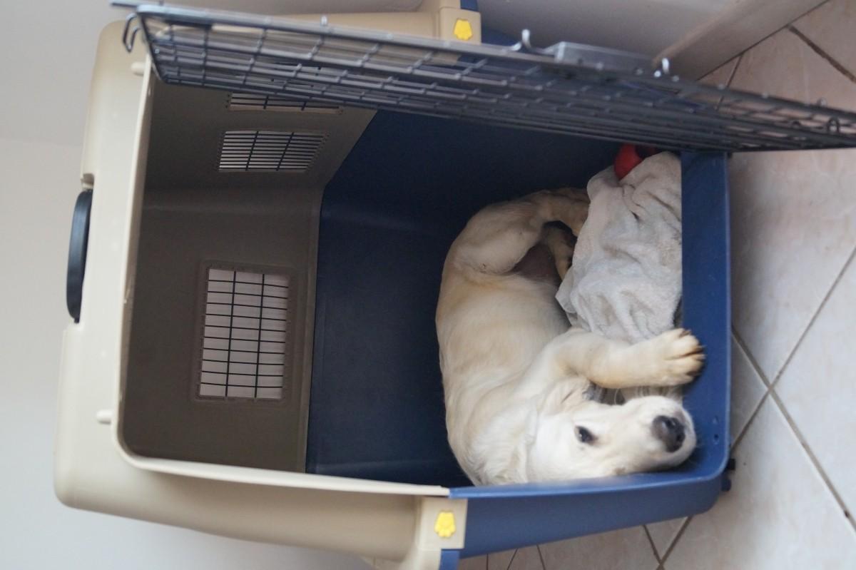 Avis sur Cage de transport pour chien ZOLIA TRAVELER