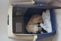 29080_Cage-de-transport-pour-chien-TRAVELER-IATA-de-80cm-à-100cm_de_Virginie_82792306957a343614506e9.64971799