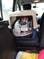 29080_Cage-de-transport-pour-chien-ZOLIA-TRAVELER-_de_laure_15277638835c4982c1cf6803.48521152