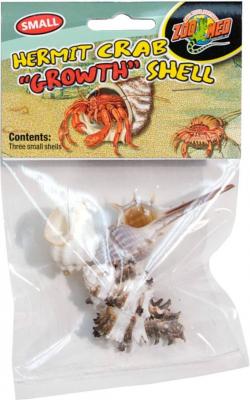 Muschel Schnecke für Einsiedlerkrebse