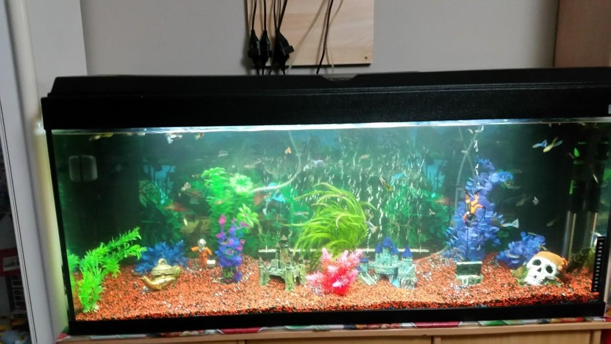 Quartz ceramique color 5kg sable et gravier aquarium for Gravier aquarium