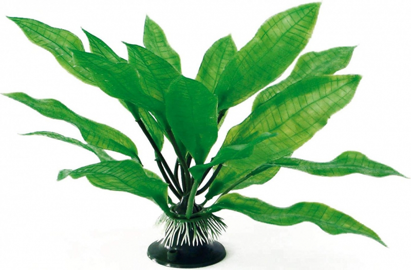 Plante Echinodorus plusieurs tailles
