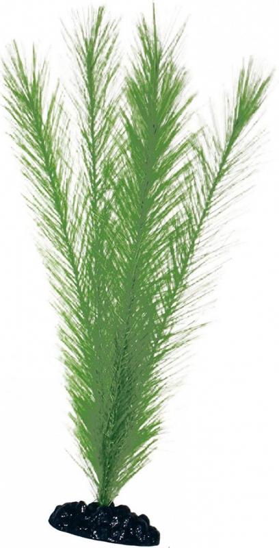Plante Blyxa plusieurs tailles