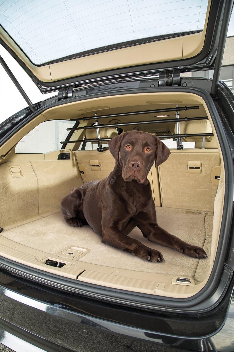 grille pare chien dog car security accessoires voiture chien. Black Bedroom Furniture Sets. Home Design Ideas