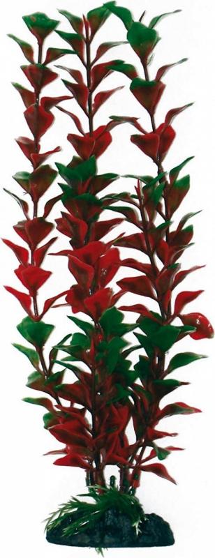 Plante Ludwigia