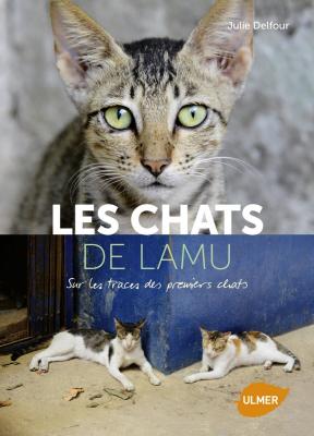 Les chats de Lamu