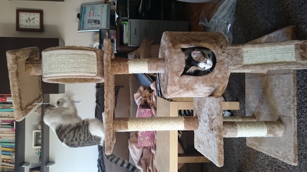 Rbol para gato liano 119 cm rbol para gato - Arbol gato ikea ...