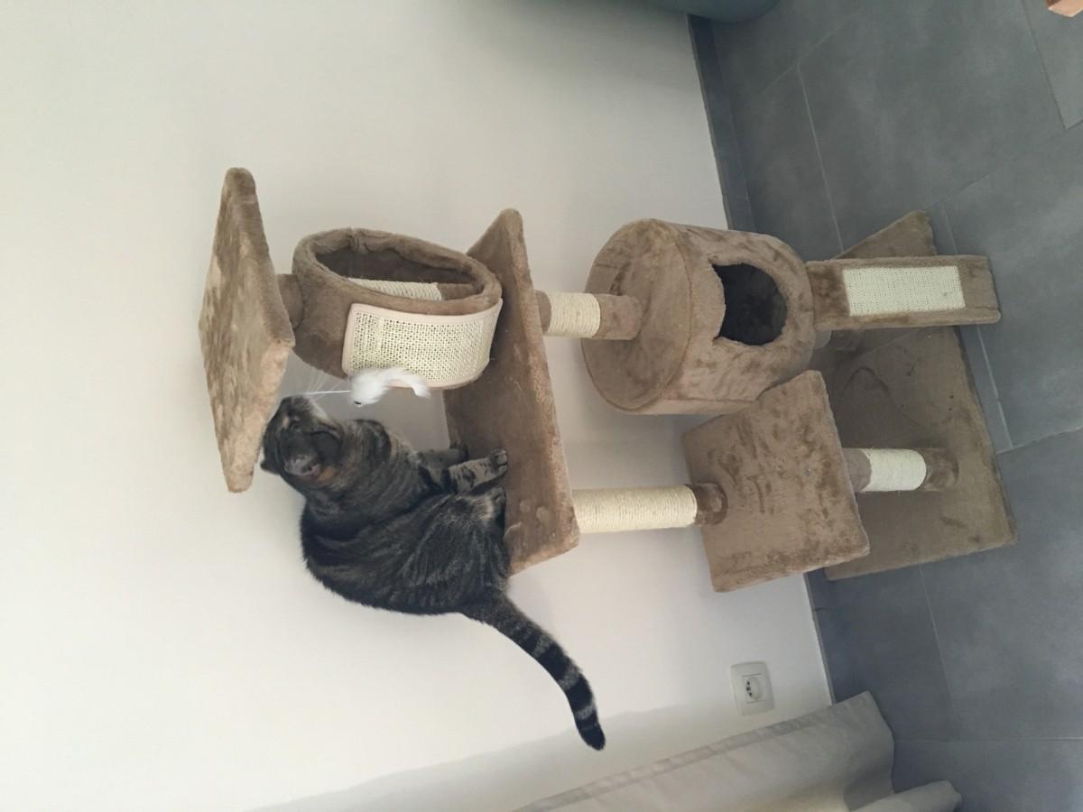 avis sur arbre chat zolia liano 119cm. Black Bedroom Furniture Sets. Home Design Ideas
