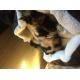 Panier-rond-pour-chat-et-chien-Zolia-Benzo---60cm_de_Nadege_1018510966083ed5bb9b2d2.87008280