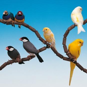 Cage pour oiseaux PIANO 6