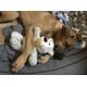 KONG-Wildknots-Bears-Ours-en-peluche-_de_Emilie_7910922166143bda1efb483.31344653