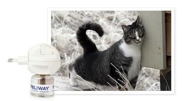 Feliway pour lutter contre l'anxiété du chat
