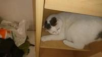30095_Royal-Canin-Veterinary---Feline-Gastro-Intestinal-GI-32_de_nicolas_24679446587a2f21198605.91513320