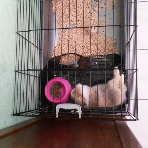 avis laetitia cage rongeur néro 3 zolia