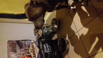 CARNILOVE-Adult-Large-Breed-Saumon-et-Dinde-pour-chien_de_Julien_13233704295a510aaa7da646.76827057