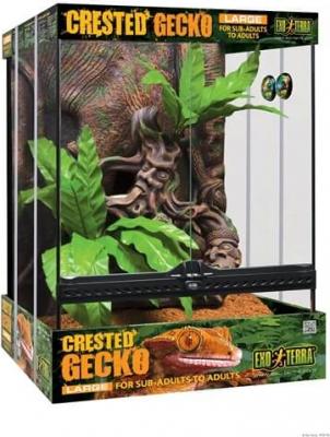 Kit GRAND Terrarium équipé Exo Terra pour gecko à crête 45x45x H60cm
