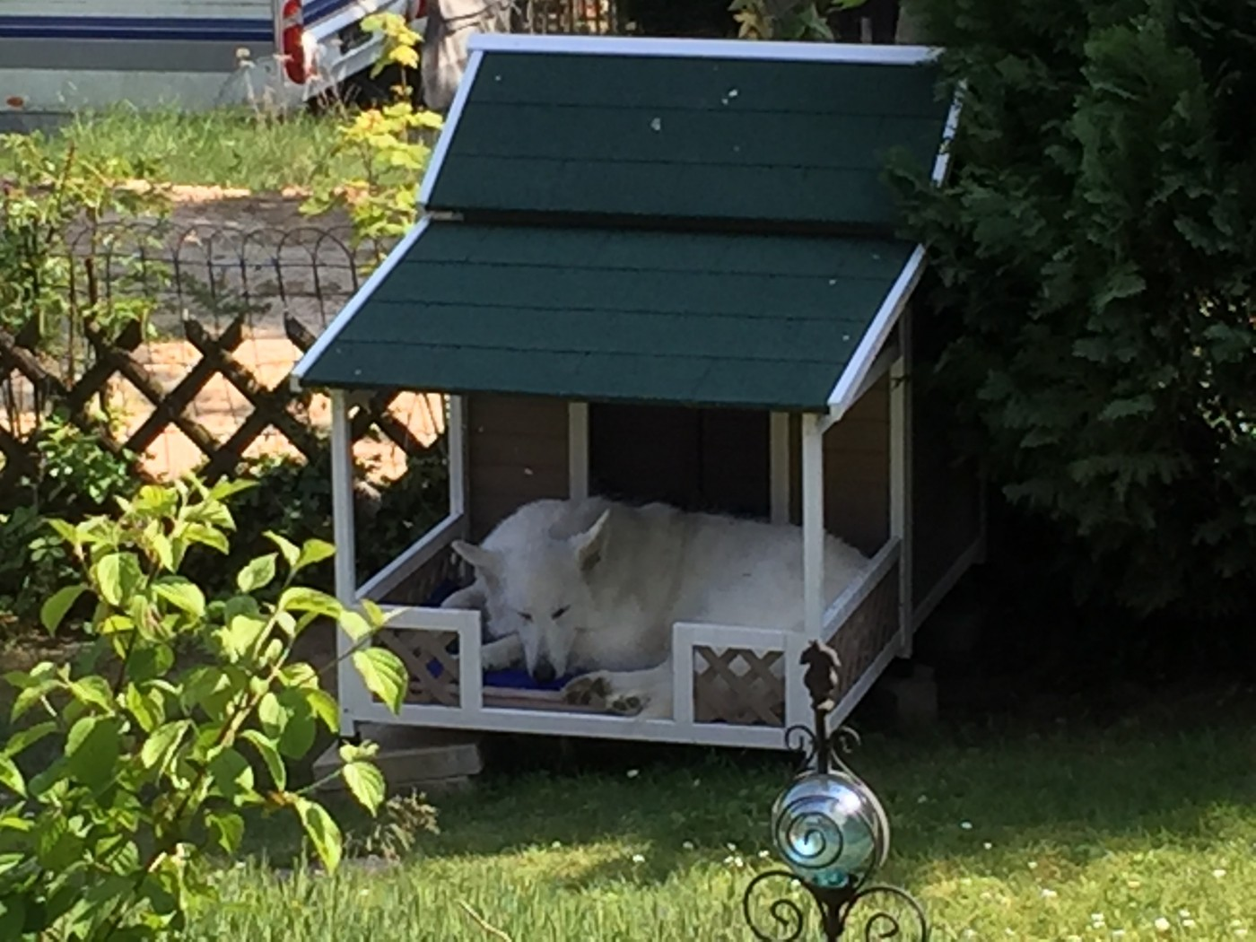 meinungen zu hundehütte mit terrasse falco
