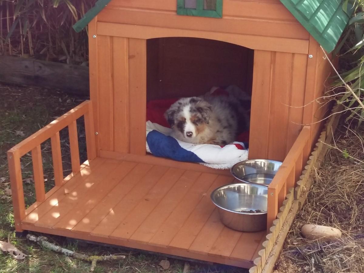 meinungen zu hundehütte mit terrasse castle