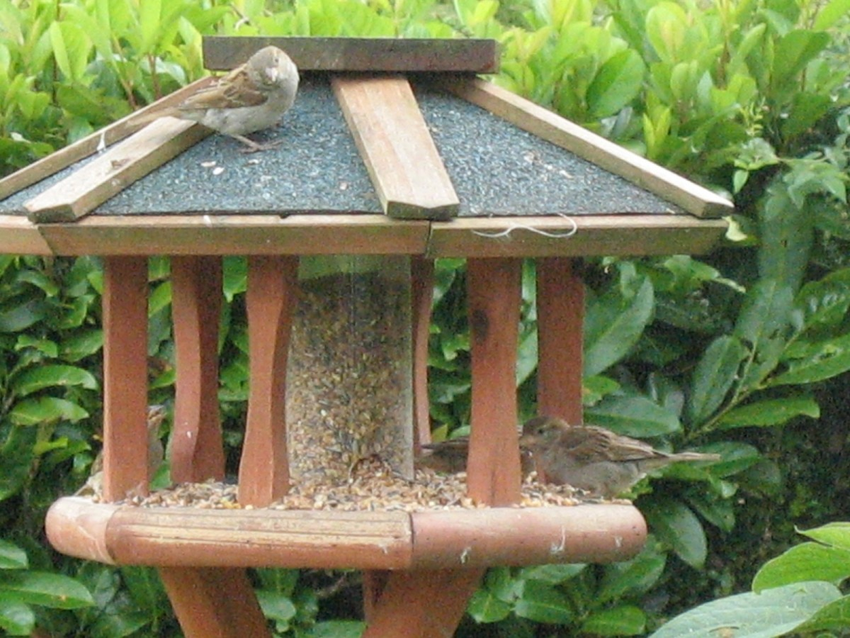 nature mix m lange pour oiseaux du ciel. Black Bedroom Furniture Sets. Home Design Ideas
