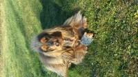 30583_Peluche-pour-chien-hérisson-gris-beige-2-tailles_de_Mylene_4628382265a4769082e35d9.30082783