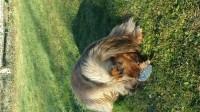 30583_Peluche-pour-chien-hérisson-gris-beige-2-tailles_de_Mylene_651745105a47689d1eb732.67519304