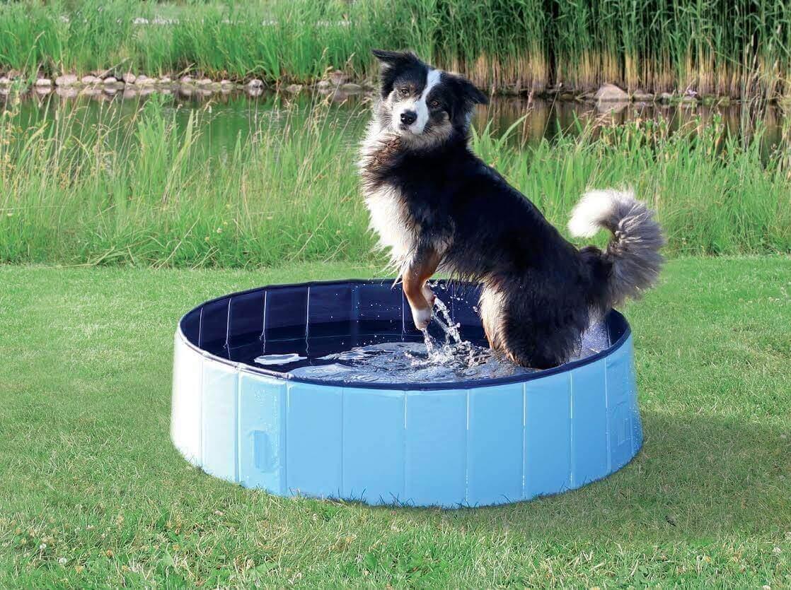 Piscina para perros azul claro azul juguetes para perro for Piscina para perro