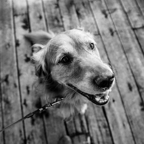 avis guylene proxym sticks chiens