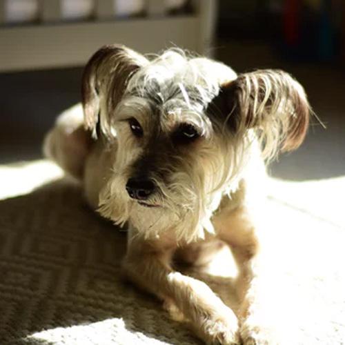 avis chantal proxym solution chiens et chats