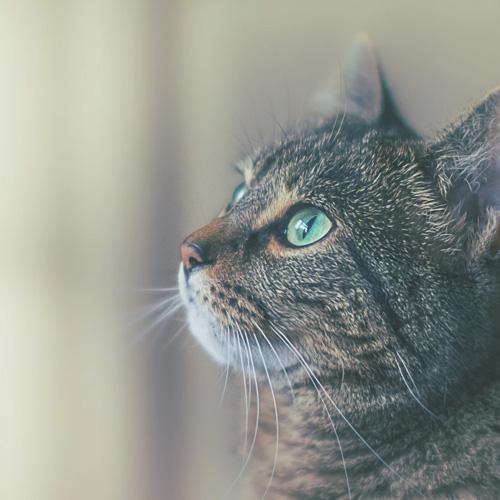 avis laure proxym croq chiens et chats