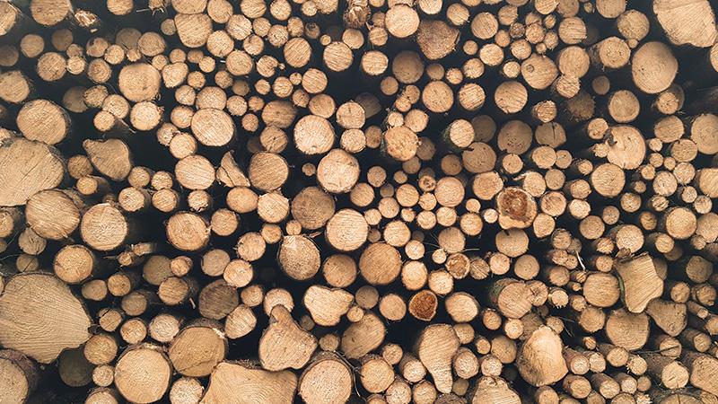 copodoux copeaux de bois forêt landaise