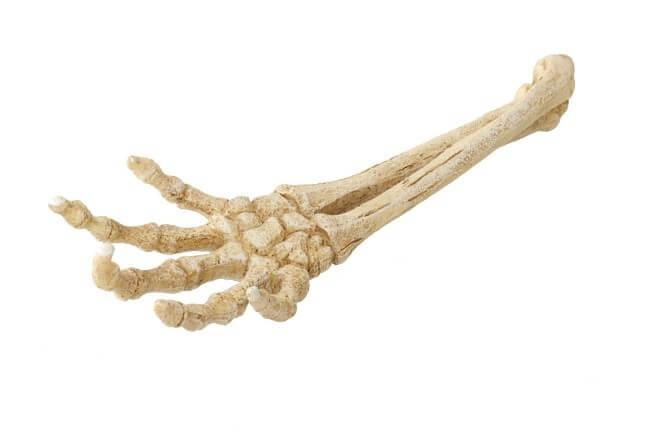D cor aqua della skeleton hand 26 8x9 4x4 5cm d coration for Decoration 4x4