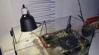 31250_Support-de-lampe-en-Céramique-Reptilus-Glow-Light_de_Camille_172576260458247cfaef9f30.61554203
