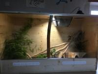 31250_Support-de-lampe-en-Céramique-Reptilus-Glow-Light_de_Rodrigue_17287749285a8d1bf2e6d443.49841478