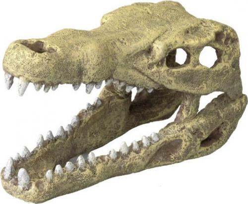 Décor AQUA DELLA CROCODILE HEAD -M- ca.19,5x9,5x10,5cm