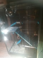 31275_Cage-Indoor-Maxi-Loft-2-Bleu-pour-Rat-et-Furet_de_Angelique_5572410715d710439da4be5.15961139