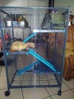 Cage-Indoor-Laxi-Loft-2-Bleu-pour-Rat-et-Furet_de_Cecile_76671536959c27a9157a4b9.23042636