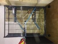 Cage-Indoor-maxi-loft-2-pour-rats,-chinchillas-et-furets-bleue-grise_de_Guillaume_26744933457f800228c0316.38328318