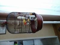 313_Cage-ronde-pour-oiseaux-DIVA_de_Monique_2035534328557d2d835e6b54.90860018