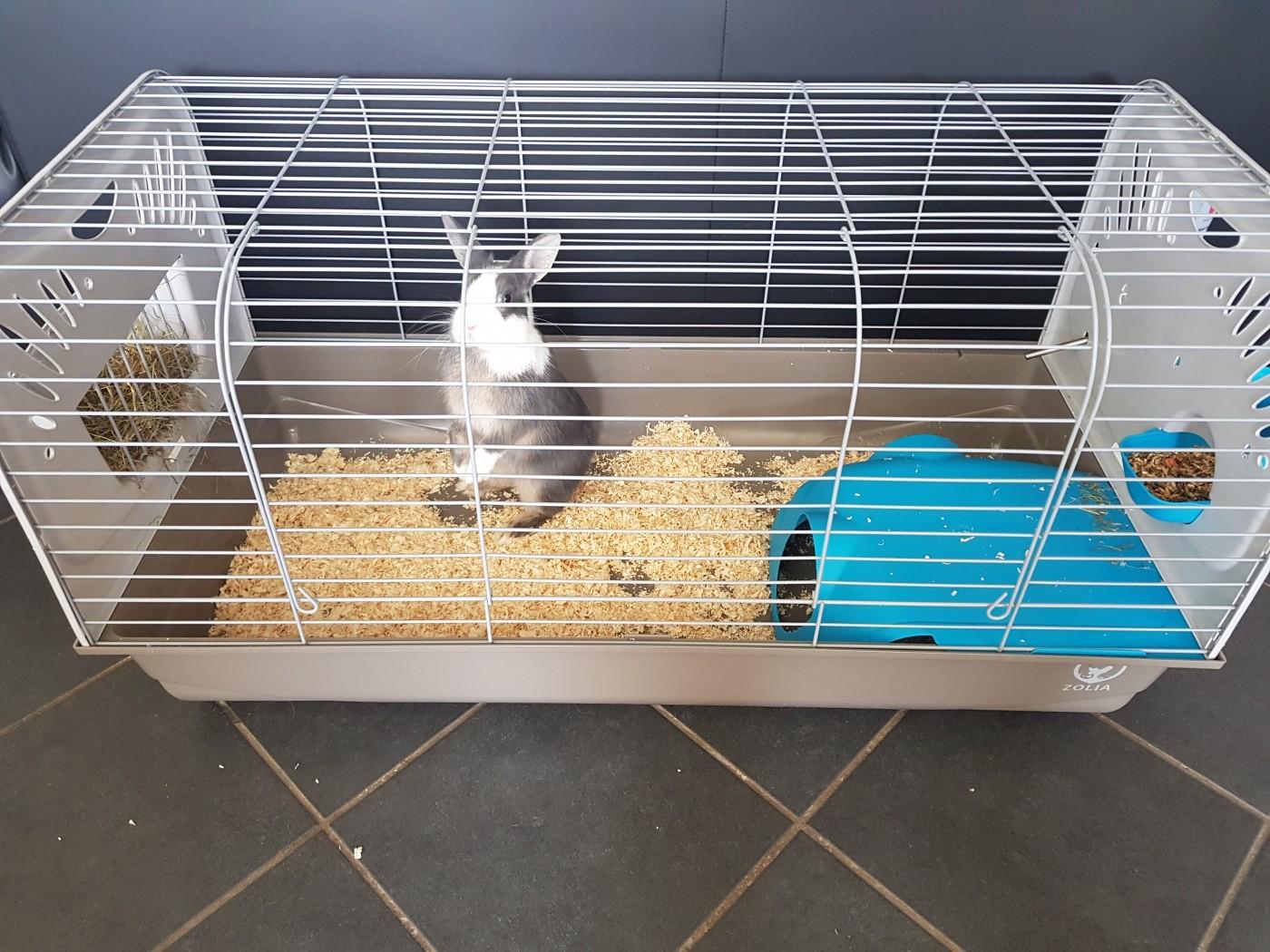 cage zolia caesar pour lapin et cochon d 39 inde 100cm. Black Bedroom Furniture Sets. Home Design Ideas