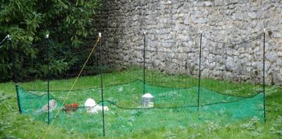 Filet enclos pour poules H125cm