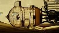 314_Cage-ronde-pour-oiseaux-BALI_de_Georges_646661721588717ef01e095.58916284