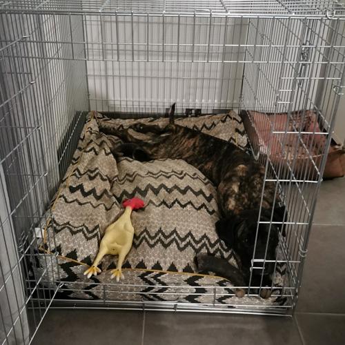 avis angélique cage transport xena zolia