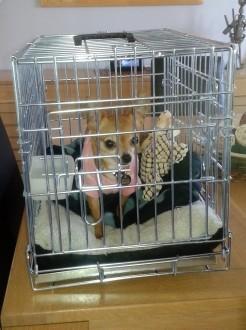 31505_Cage-de-transport-pour-chien-Xena-avec-fond-en-métal_de_jocelyne_161967987658ca806c648798.82496624