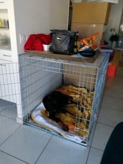 31505_Cage-de-transport-pour-chien-ZOLIA-XENA-avec-fond-en-métal_de_Agnes_15067783675b31dcee2f0412.91359275